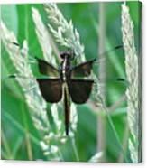 Widow Skimmer Dragonfly Canvas Print