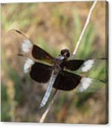 Widow Skimmer Dragonfly Male Canvas Print