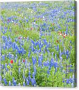 Wild About Wildflowers Of Texas. Canvas Print