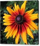 Wild And Crazy Coneflower Canvas Print