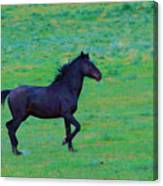 Wild And On The Go Canvas Print