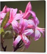 Wild Azaleas Canvas Print