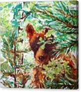 Wild Bear Peek-a-boo Watercolour Canvas Print