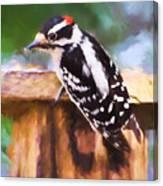 Wild Birds - Downy Woodpecker  Canvas Print