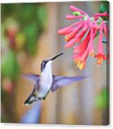 Wild Birds - Hummingbird Art Canvas Print