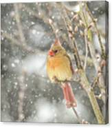 Wild Birds Of Winter - Female Cardinal In The Snow Canvas Print