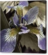 Wild Blue Iris Canvas Print