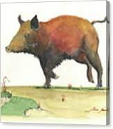 Wild Boar Delgadin Canvas Print