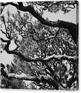 Wild Branches Canvas Print