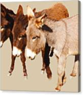 Wild Burro Buddies Canvas Print