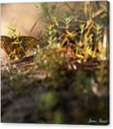 Wild Butterfly Canvas Print