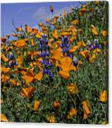 Wild California Poppies And Lupine Canvas Print