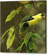 Wild Cherries And Wild Canaries Canvas Print