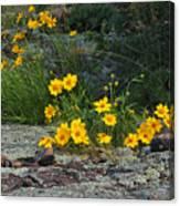 Wild Coreopsis On Hughes Mountain 1 Canvas Print