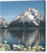 Wild Daisies In The Tetons Canvas Print