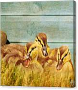 Wild Ducklings Canvas Print
