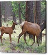 Wild Elk Baby And Mom Canvas Print