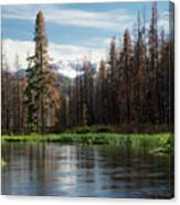 Wild Fire Aftermath  Canvas Print