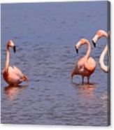Wild Flamingos Canvas Print