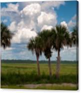Wild Florida Canvas Print