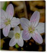 Wild Flower Canvas Print