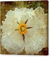 Ivory White Wildflower  Canvas Print