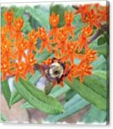 Wild Flowers And Bumble Bees Canvas Print