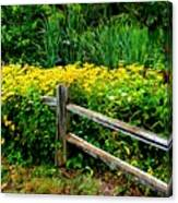 Wild Flowers And Fence Canvas Print