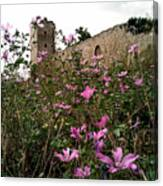 Wild Flowers At The Old Fortress Canvas Print