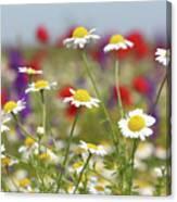 Wild Flowers Field Nature Spring Scene Canvas Print