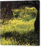 Wild Flowers In An Olive Grove Canvas Print