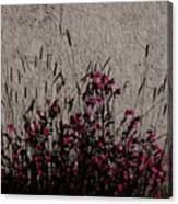 Wild Flowers On The Wall Canvas Print