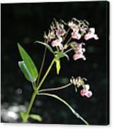 Wild Flowers Over Stream Canvas Print