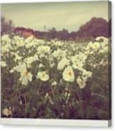 Wild Flowers Soft Canvas Print