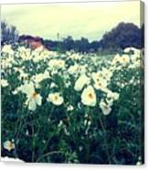 Wild Flowers White Canvas Print