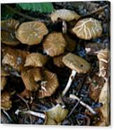 Wild Forest Mushroom Patch Canvas Print
