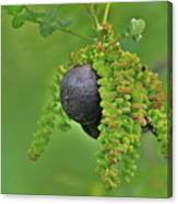 Wild Fruit Canvas Print
