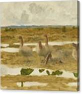 Wild Geese In The Marsh Canvas Print