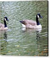 Wild Geese On A Lake 6 Canvas Print