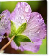 Wild Geranium After The Rain Canvas Print