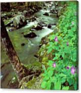 Wild Geraniums On Bradley Fork Canvas Print