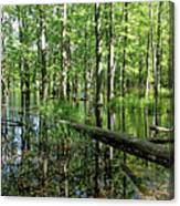 Wild Goose Woods Pond II Canvas Print