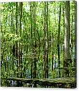 Wild Goose Woods Pond Vii Canvas Print