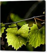 Wild Grape Leaves Canvas Print