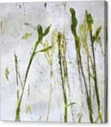 Wild Grass 2 Canvas Print