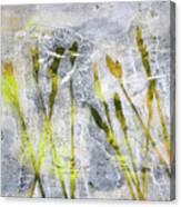 Wild Grass 3 Canvas Print
