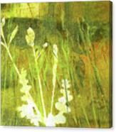 Wild Grass 7 Canvas Print