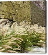 Wild Grass Along An Alley Wall Canvas Print