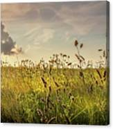 Wild Grass And A Lonely Cloud Canvas Print
