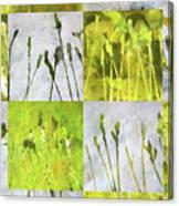 Wild Grass Collage 3 Canvas Print